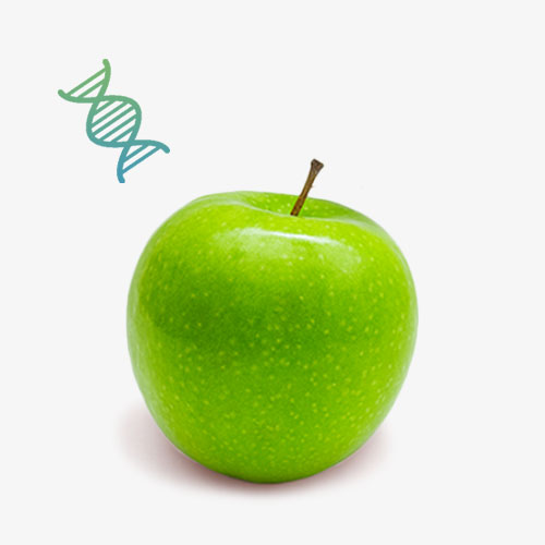 Apple Stem Cell Contract Manufacturing Malaysia | OEM COMPANY MALAYSIA